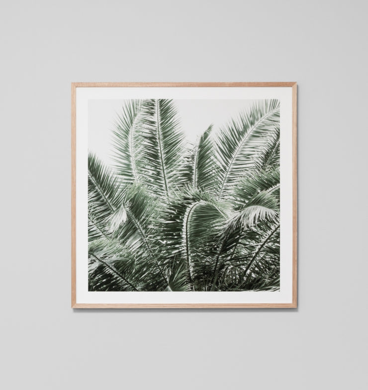 WILD PALMS · FRAMED PRINT