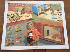 Lovely 'Pets at School' print by E.R. Boyce 1962 - Wowie Zowie  - 1