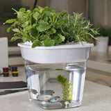 Potti Personal Desktop Aquaponics Kit|Potti 輕巧版魚菜共生系統