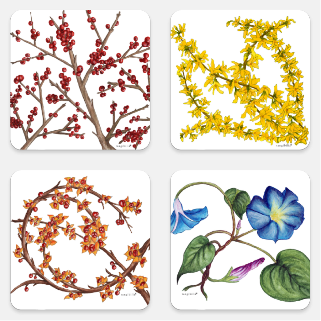 Coasters | Set of four | Winterberry, Forsythia, Morning Glory, Bittersweet | Seasons Collection