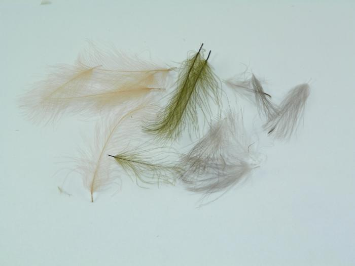 CDC feathers used for tying high floating flies