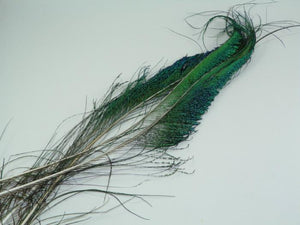peacock swords from Rangeley Maine fly fishing shop