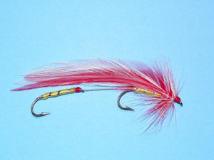parmachenee belle from Rangeley Maine fly fishing shop