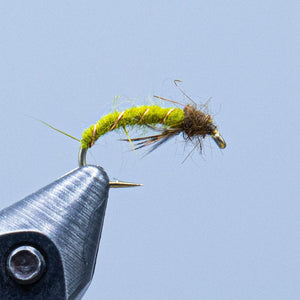 caddis larva at a maine fly shop