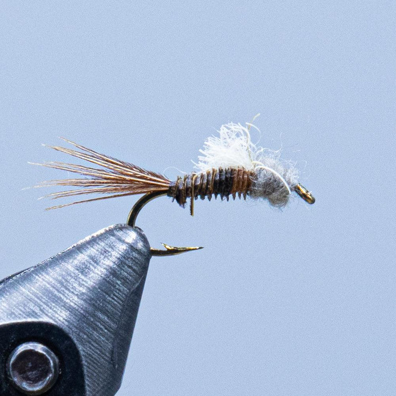 hendrickson emerger at a maine fly shop