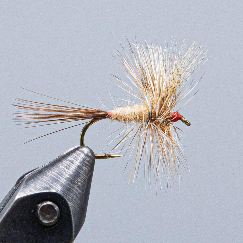 march brown at a maine fly shop