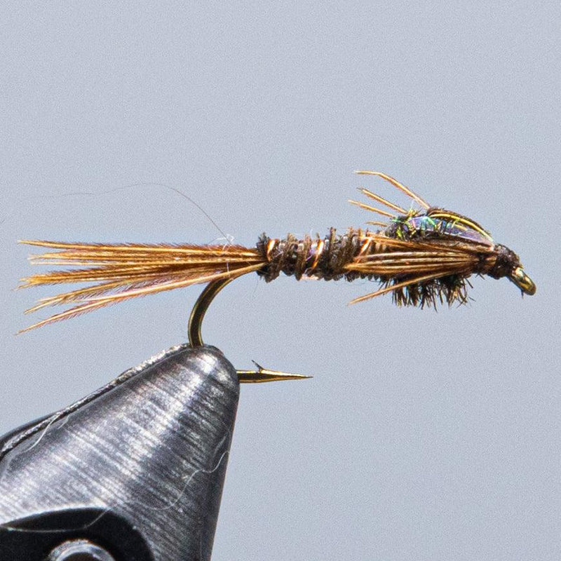 pheasant tail at a maine fly shop