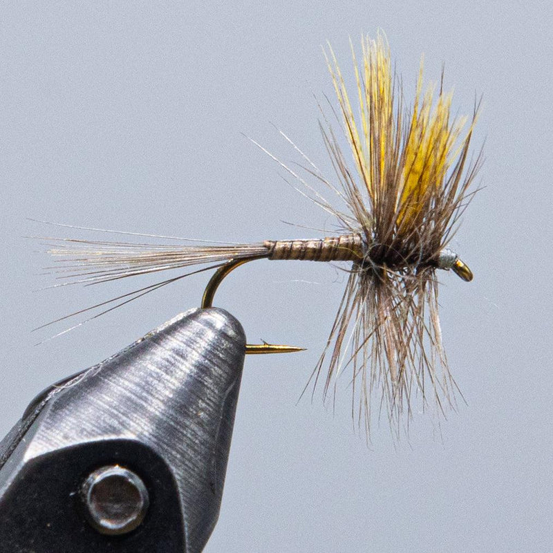 red quill from Rangeley Maine fly fishing shop