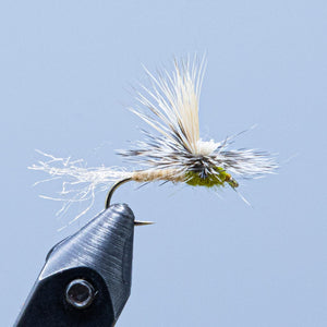 cutter caddis at a Maine fly shop