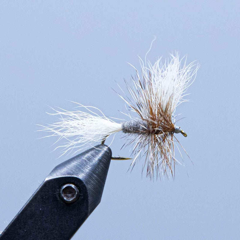 adams wulff at a maine fly shop