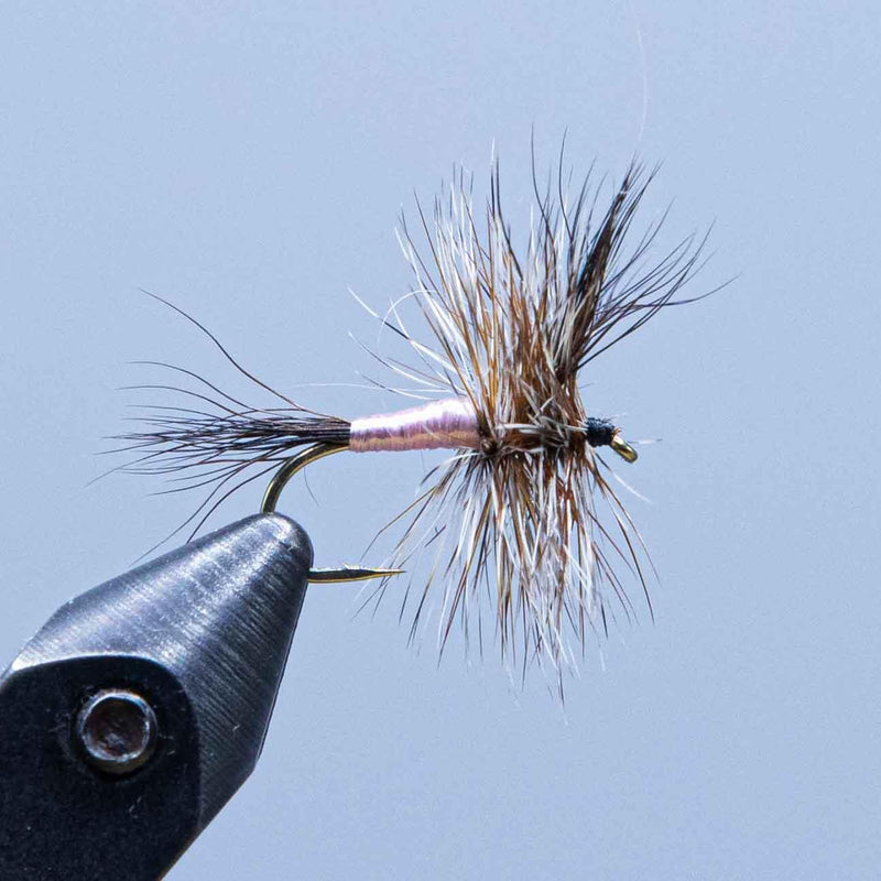black wulff at a maine fly shop