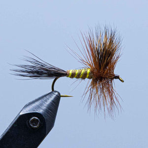 brown drake at a maine fly shop