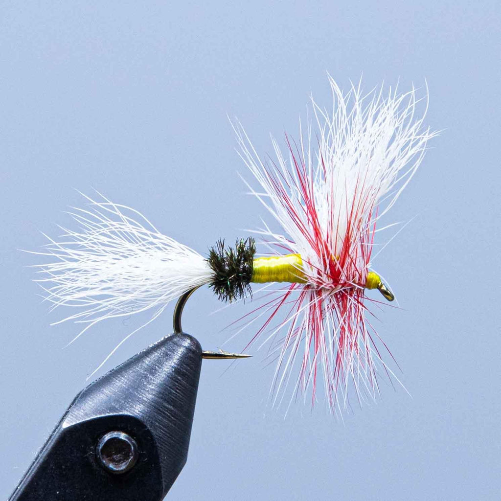Parmachenee Belle Wulff at a maine fly shop