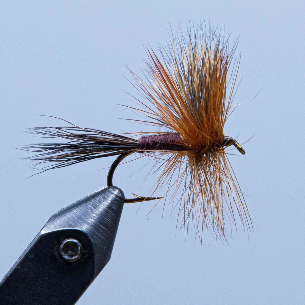 brown wulff at a maine fly shop