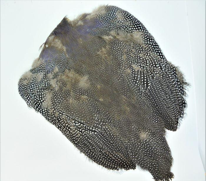 guinea fowl skin at a maine fly shop
