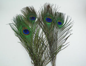 peacock eyes from Rangeley Maine fly fishing shop