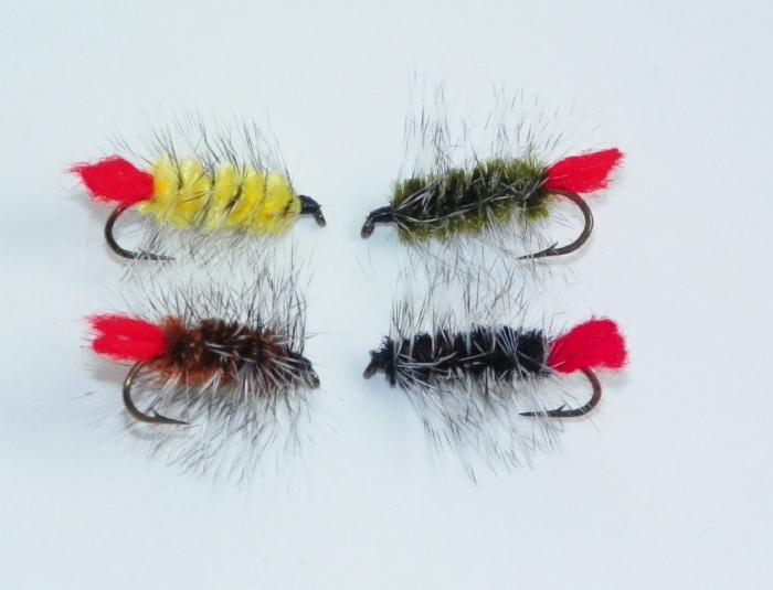 wooly worm from Rangeley Maine fly fishing shop