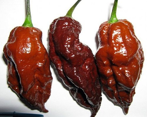 Chocolate Bhutlah seeds