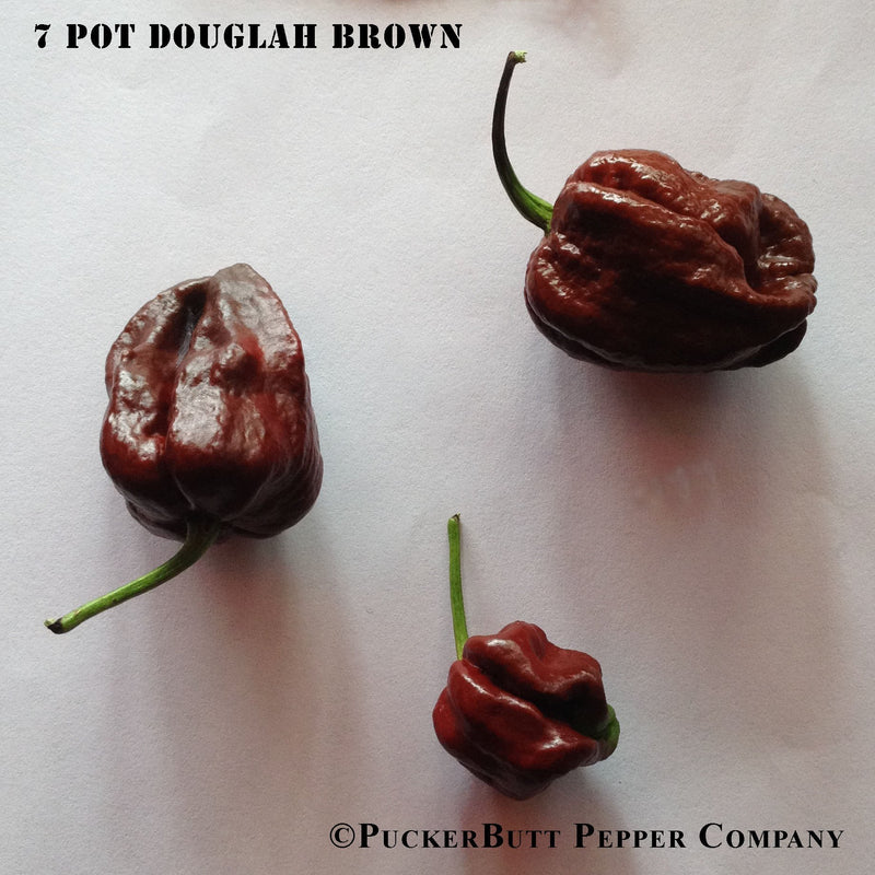 7 Pot Douglah Brown