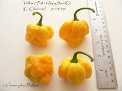 7 Pot Yellow