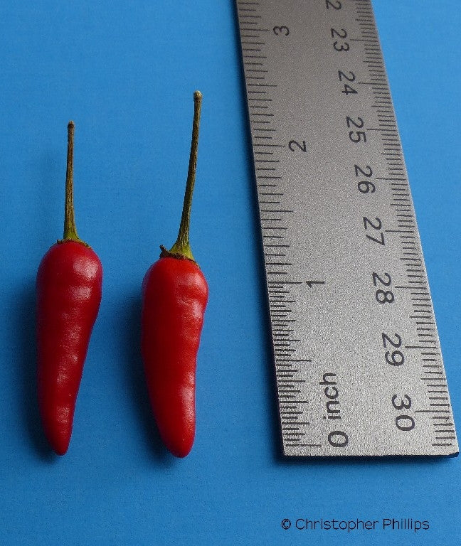 Sudanese Bird Pepper (CP 029)