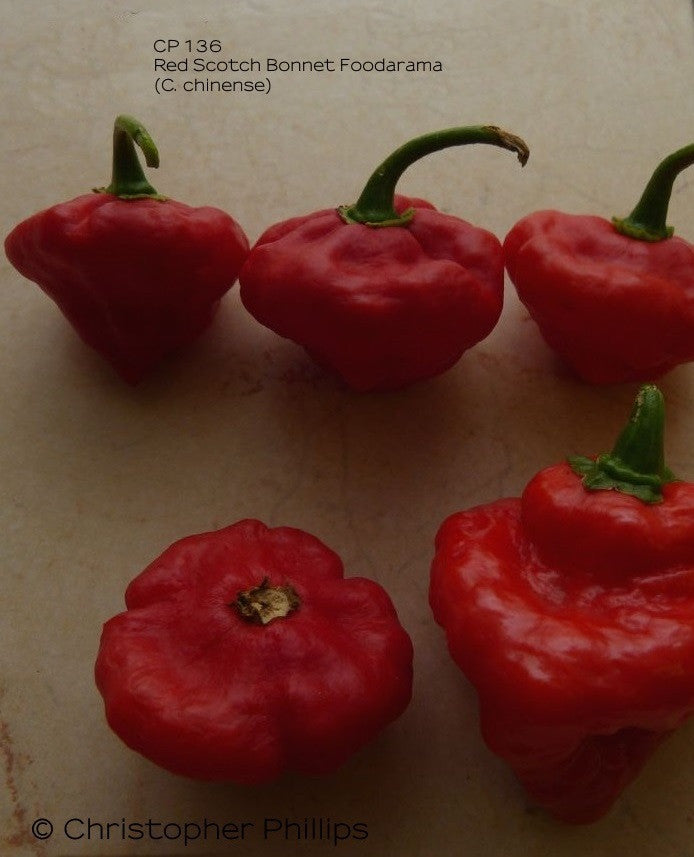 Red Scotch Bonnet Foodarama (CP 136)