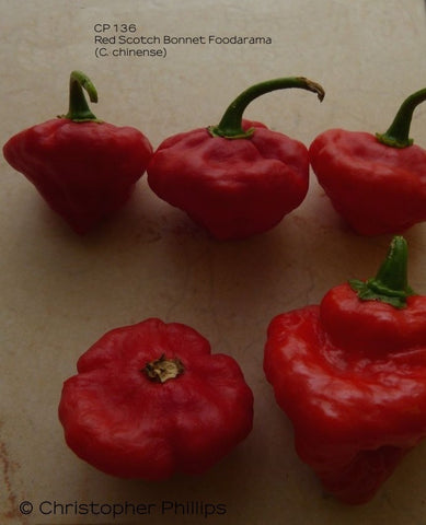 CP 136 - Red Scotch Bonnet Foodarama
