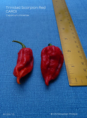 Trinidad Scorpion Red - CARDI (CP 321)