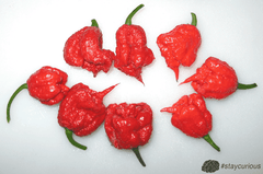 Organic  - Smokin' Ed's Carolina Reaper® SEEDS