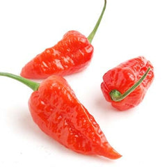 Bhut Jolokia (Ghost Pepper)