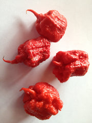 Smokin Ed's Carolina Reaper World's Hottest Pepper, depicting seeds fully grown Puckerbutt Pepper Company