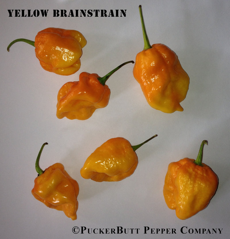 Yellow Brain Strain