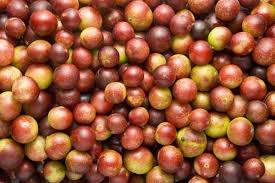 Top 5 Things About Camu Camu for Dogs and Cats camu camu for dogs camu camu for cats