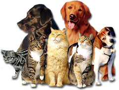 Pet supplements for immune system disorders.