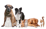 Pet supplements for influenza and flu in dogs and cats.