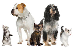 Pet supplements to help support musculoskeletal function in dogs and cats.