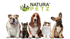 top 10 holiday gifts for dogs and cats natura petz organics top 10 stocking stuffers for dogs and cats natura petz organics