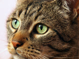 Pet supplements to help treat ocular disease and promote eye health in dogs and cats.