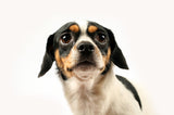 Pet supplements to help reduce feelings of panic and anxiety in dogs and cats.