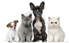 Pet supplements for roundworm in dogs and cats.