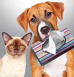 Herbal remedies for cats and dogs to help relieve dry coughs due to canine and feline kennel cough.