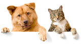 Pet supplements for herniated discs in dogs and cats.
