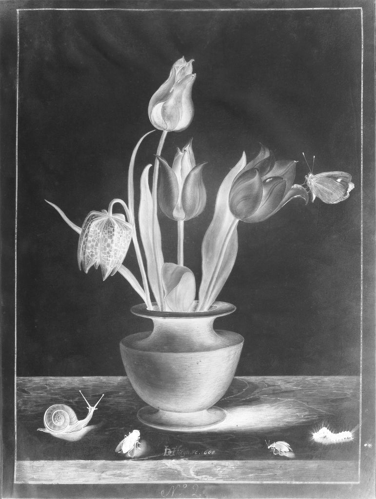 Positive, Negative Painting Photograph (after Jacob de Gheyn II, Still Life with a Fritillary and Three Tulips in a Terra Cotta Vase, a Snail and Four Insects, 1600)