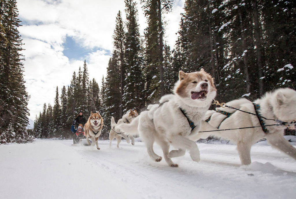 Cute Lesbian Date Night and Gift Ideas for Your Girlfriend Dog Sledding