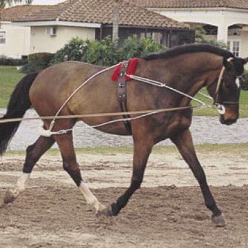 Lunging & training equipment