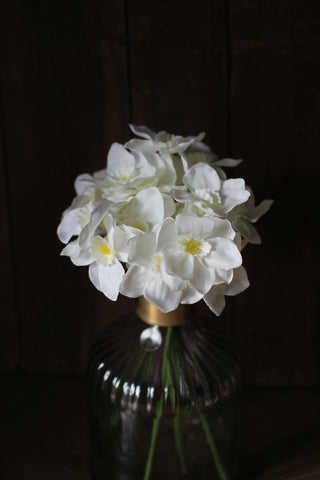 Narcissus White Flower Stems