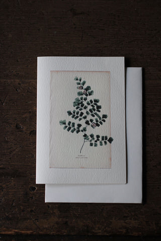 Elena Deshmukh Card, Maidenhair Fern