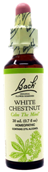 White Chestnut - Flower Essence