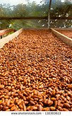 Single-origin 100% Hawaiian Cocoa Bean (sold by pound) (1-19 lbs)