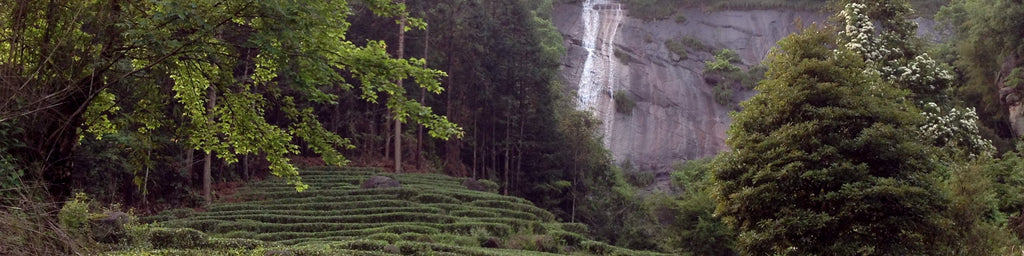 Wuyi mountain water fall and tea trees